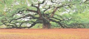 louv-grand_arbre
